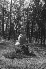 (ijarosek) Tags: blackandwhite bw white black film cemetery graveyard statue forest 35mm death hungary asahi takumar 14 budapest 400 pan ilford praktica magyarorszg tl5b t nemzeti kerepesi pan400 temet srkert fiumei prakticatl5b