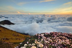 Alpine flowers above clouds ,  (Vincent_Ting) Tags: sunset sky mountain night clouds sunrise star glow taiwan trails galaxy flare moonlight formosa   crepuscularrays startrails milkyway  seaofclouds            mountainhehuan             vincentting   hthehuan