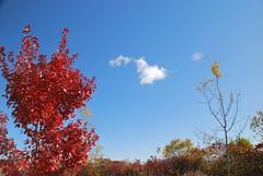 fall_243 (Sascha G Photography) Tags: autumn trees toronto color tree fall leaves leaf nikon seasons waterfront lakeshore indiansummer d60