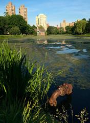 Meer (Chris Protopapas) Tags: park newyorkcity lake pond meer harlem scum iphone