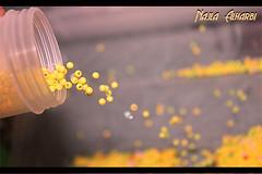 خربَشْة فوتوَغرآفيــَة (Najla Alharbi) Tags: صور تفاؤل خرز كانون550