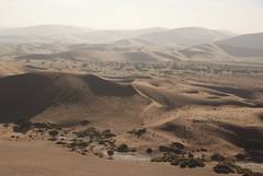 Aerial view of dunes, Namib-Naukluft National Park, Namibia. (Bill Murray EarthPhotos) Tags: africa wood tree landscape sand desert african dune barren namibia drift namibian sossusvlei austere namibnaukluftpark barchan