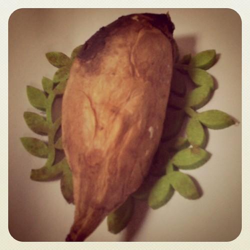 Taiwan or Bird? 可愛又好吃的地瓜