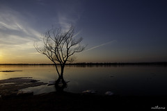 Spring Sunset (Kadacat (Marlene)) Tags: sunset tree spring wideangle ottawariver petrieisland canon40d kadacat