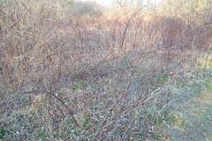 DSC_0122 (rlg) Tags: march monday 19 2012 0319 fpr 201203 nikond5100 03192012 20120319