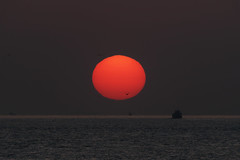 Spring Sunset (halfrain) Tags: park sunset sea sky sun bird japan boat ship seagull sigma 300mm teleconverter merrill foveon sd1 20x 600mm 120300mm sigma120300mm  sigma120300mmf28 tc2xex sigma12030028 maikopark sd1merrill