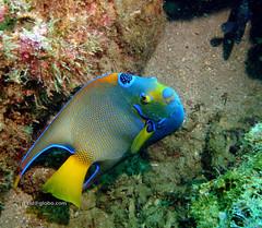 DSC01049 (Paulo Cid) Tags: life sea fish nature canon mar underwater natureza diving peixe vida submarino submerso
