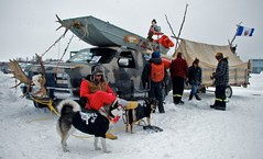 Ugly truck contestant (Liz Hargreaves) Tags: dog canada festival truck spring northwest contest northwestterritories territories yellowknife tgam:photodesk=spring2012 longjohnjamboree lizhargreaves uglytruckanddogcontestant