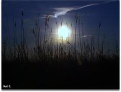 Contraluz con espigas y sol (Nati C.) Tags: naturaleza sol contraluz catalunya tarragona espigas deltadelebre ltytrx5 cruzadasii cruzadasi