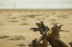 (palashmitter) Tags: sea india beach sand dof depthoffield westbengal digha eastmidnapore newdigha