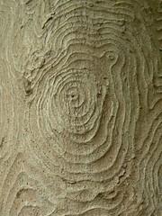 Tree Patterns, Harz (uempe (only sporadically here)) Tags: mountain mountains tree nature berg digital germany landscape deutschland photo europa europe foto natur panasonic valley ravine gorge bode landschaft baum harz tal 2012 schlucht gebirge thale sachsenanhalt bodetal panasoniclumixdmcfz7
