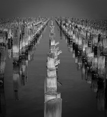 "Black and White Pier • <a style=""font-size:0.8em;"" href=""http://www.flickr.com/photos/7605906@N04/7459349374/"" target=""_blank"">View on Flickr</a>"