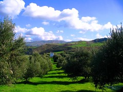 Crete (Olga G.) Tags: clouds greece crete olivetrees      me2youphotographylevel1
