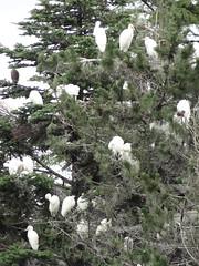 (cxdsew321) Tags: bird japan earthquake tsunami sendai miyagi