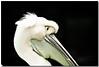 (sergio.pereira.gonzalez) Tags: naturaleza bird nature animal animals photoshop animales pajaro animaux oiseaux lightroom canon400d sergiopereiragonzalez httpfocale3fr