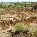 Desierto de la Tatacoa (7)