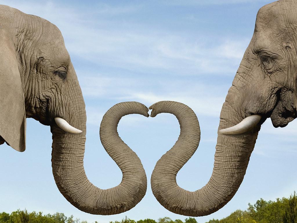 elephant-love-dating