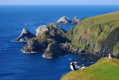 In Hermaness, Again. (Wrinzo) Tags: island europa europe cliffs puffin puffins atlanticocean shetland scogliere unst scozia isole scoland pulcinelladimare oceanoatlantico fraterculaartica burrafirth riservanaturaledihermaness hermanessneserve