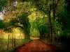 Down the Lane in England (h_roach) Tags: road travel autumn trees england fall nature horizontal forest fence landscape outdoors europe britishisles walk nopeople digitalpainting lane fields oaktrees firstquality greatbirtain textureart