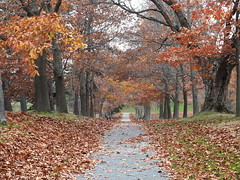 Capital Park (RonG58) Tags: pictures new trip travel light usa color fall film nature trekking walking landscape geotagged photography us photo leaf raw day image photos fallcolors live maine scenic picture trails images foliage trail photograph augusta digitalcamera aki leafs preserve greatphotographers lautomne fugifilm capitalpark topshots elotoño finepixhs20exr dailynaturetnc12 flickkrsportal rong58 elfollaje