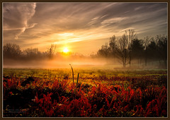 Sunrise Mist (Paul Jolicoeur Photography) Tags: sognidreams