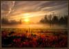 Sunrise Mist (Paul Jolicoeur Photography) Tags: sognidreams