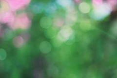 Green bokeh (Nieri Da Silva) Tags: fern verde green planta helecho apple mxico canon vintage lens mexico blurry aperture mexicocity df colorful bokeh edited noflash colores ethereal athome pancake dailylife  distritofederal editada colorido pancakelens primelens mexico vsco fixedfocuslens eost3i vscofilm editadaconaperture ef40mmf28stm editedinapplesaperture nieridasilva