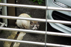 Today's Cat@2016-05-06 (masatsu) Tags: cat pentax osaka catspotting mx1 thebiggestgroupwithonlycats