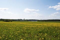 Field, Lohja (jonikauppila) Tags: spring kevät nature luonto summer kesä apple blossom flowers kukat kukka flower omena lohja suomi finland