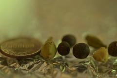 "MacroMondays ""Smaller than a coin"" (mckernanmargaret) Tags: coin berries cent than smaller juniper pods cardamon macromonday"