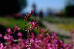 Shooting (Radu Andrei B) Tags: bulgaria botanicalgarden balchik