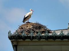 Wilhelma- Storch (to.wi) Tags: bird zoo vogel wilhelma storch klapperstorch towi