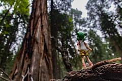 IMG_3578.jpg (edcool1_1) Tags: yotsuba yotsubato revoltech yotsubayosemite         neldergrove shadowofthegiants sequoia redwood giantredwoods forest trees