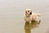AP16-9902 Little dude (Jan-Willem Adams) Tags: dog netherlands puppy labrador nikki nederland buddy gelderland honden erkemederstrand fordjw janwillemadams adamsphotography