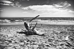 """E' qui che voglio """" riposare"""". (IMAphotoArt) Tags: monocromo nuvole mare cielo tronco spiaggia bianconero"""