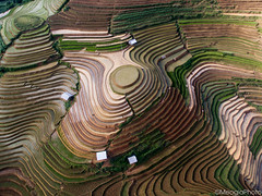 Terraced rice field in Vietnam from above (Meogia Photography) Tags: water field season landscape amazing rice country vietnam soil cang sapa thang phong drone terraced cnh bc m ty chi rung bc ma nc