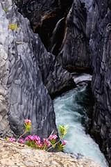 { Gole dell'Alcantara, Sicily.} ( dlu ) Tags: longexposure pink flowers summer italy nature canon landscape reflex rocks exposure italia falls sicily alcantara whater gole