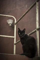 (ma.rtt) Tags: calle rojo gato baranda