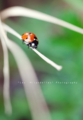 Un precipizio d'abbandono (*Les Hirondelles* Photography) Tags: light red italy white black macro nature grass sunshine canon garden insect walking outside daylight spring eyes poetry day bright bokeh quote path exploring small joy naturallight natura line fortune erba luck ladybug delicate joyful brightness giardino delicacy goodluck walkingonsunshine microcosmo springhassprung coccinella 100mm28 fragility aldamerini buonafortuna filoderba goodlucksymbol explorating leshirondellesphotography filoderbasecca