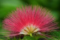 Floral display (Deb Jones1) Tags: park pink flower macro nature beauty canon garden botanical outdoors flora flickrduel flickrawards debjones1