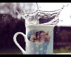 68/366 (+5 in cmnt.) (emma sutcliffe photography) Tags: cup water cat outside outdoors during was rachel bokeh outdoor adorable kitty it mug but splash cus hale comments died  splashes 366 dived 365project wroth 3652012 365the2012edition glitterfart metallicbuttocks hyour