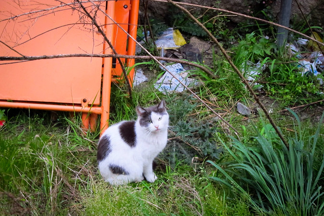 Today's Cat@2012-04-20