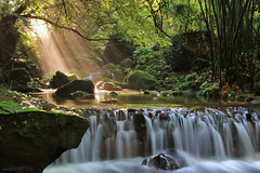 Streams of Light (Singer ) Tags: stone sunrise canon waterfall stream ray taiwan singer taipei    bamboos        tungtree   verniciafordii            singer186