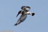 IMG_5714L (Sharad Medhavi) Tags: bird canoneod50d mangomistresortkarnatakastatehighway87