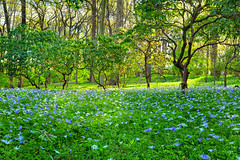 As In A Dream (Northern Straits Photo) Tags: flowers trees spring delaware vangogh sousbois winterthurgardens northernstraitsphotography
