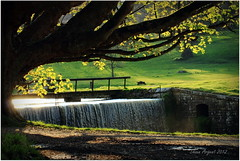 Evening at Studley (Shaun Argent) Tags: tree leaves sunshine river evening waterfall spring april ripon studley