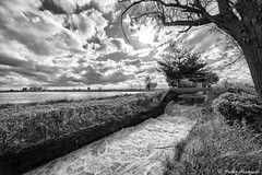 Troubled water (valter venturelli) Tags: blackandwhite bw water monochrome clouds landscape noiretblanc ricefields biancoenero ringexcellence blinkagain