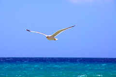 Playa de Sotavento (Motiv-Jger) Tags: june juni islands spain sony fuerteventura a33 atlantic canary slt spanien 2012 atlantik kanarische inseln fbdg ringexcellence sonyslta33 freedomtosoarlevel1birdphotosonly