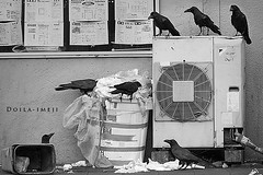 Queue for Breakfast (doyleshafer) Tags: bw bird japan tokyo crows vr d4 200mm f2g