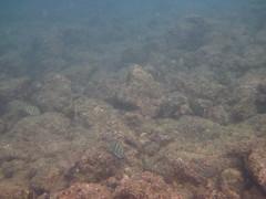 Kauia Day 6-29 (djfrantic) Tags: hawaii snorkeling kauai poipu aloha hanalei summervacation kilauea kee mahalo kapaa familyvacation princeville lihue hanapepe gardenisle nukumoi